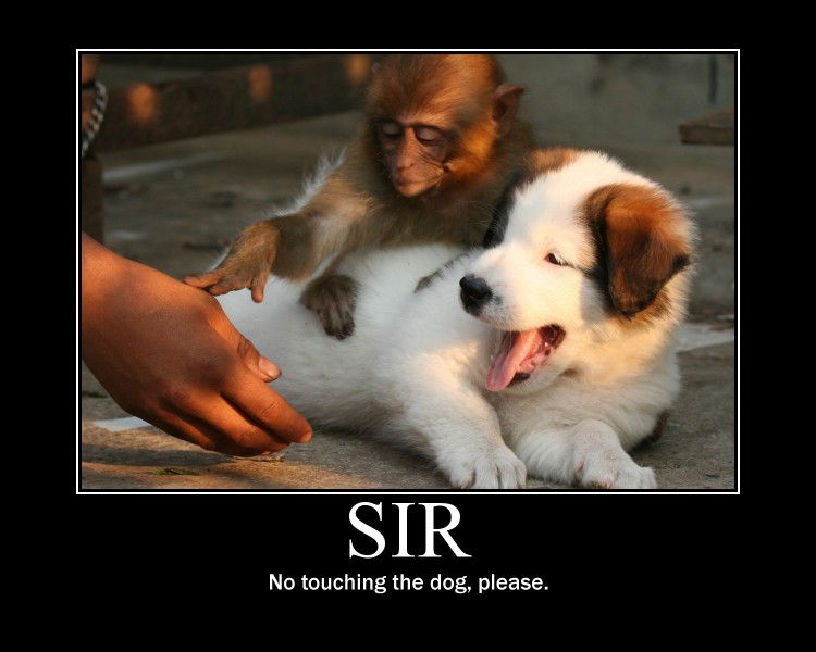 sir-no-touching-the-dog-please.jpg