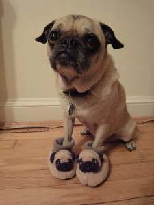 Dog Wearing Dog Shoes That Look Like Him