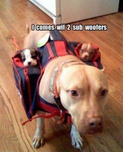 Funny Dog: Comes With 2 Sub Woofers